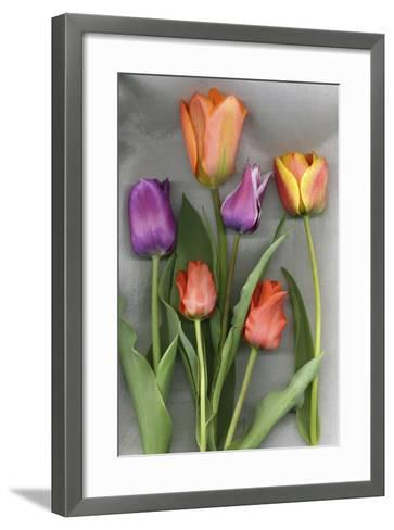 Colorful Tulips on White Background-Anna Miller-Framed Art Print
