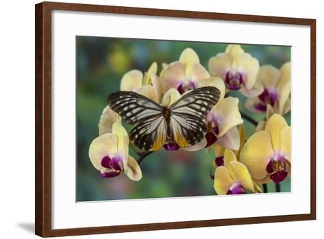 Butterfly Calinaga Buddha, the Freak-Darrell Gulin-Framed Art Print