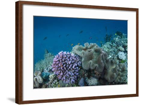 Leather Coral (Alcyonacea), Fiji. Coral Reef Diversity-Pete Oxford-Framed Art Print