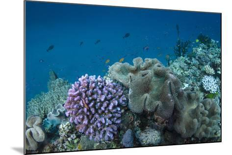 Leather Coral (Alcyonacea), Fiji. Coral Reef Diversity-Pete Oxford-Mounted Photographic Print