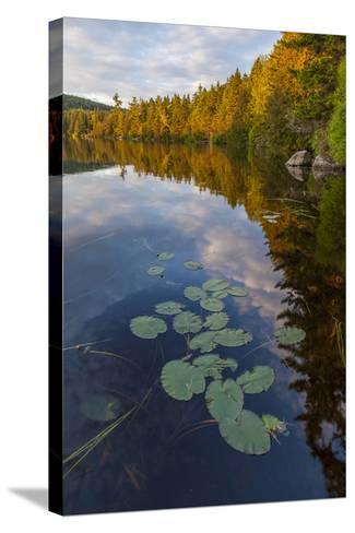 Water Lilies and Cloud Reflection on Lang Pond, Northern Forest, Maine-Jerry & Marcy Monkman-Stretched Canvas Print