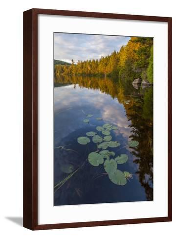 Water Lilies and Cloud Reflection on Lang Pond, Northern Forest, Maine-Jerry & Marcy Monkman-Framed Art Print