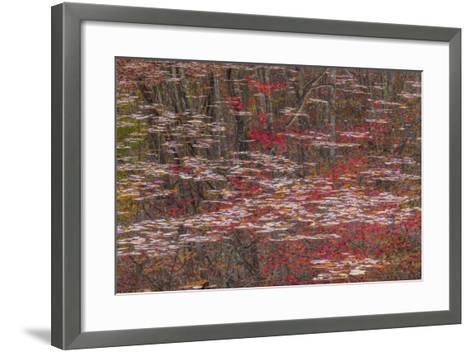 Tennessee, Falls Creek Falls SP. Fall Reflections in Fall Creek Lake-Don Paulson-Framed Art Print