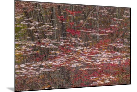 Tennessee, Falls Creek Falls SP. Fall Reflections in Fall Creek Lake-Don Paulson-Mounted Photographic Print