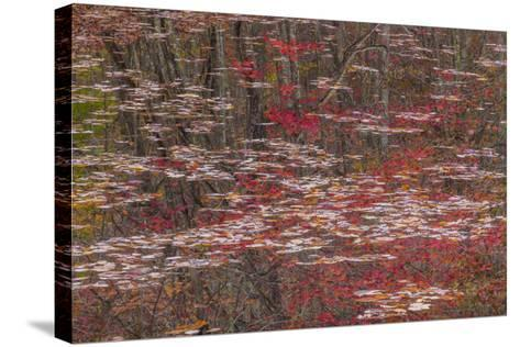 Tennessee, Falls Creek Falls SP. Fall Reflections in Fall Creek Lake-Don Paulson-Stretched Canvas Print