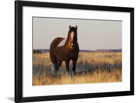 Wild Horse, Steens Mountains-Ken Archer-Framed Art Print