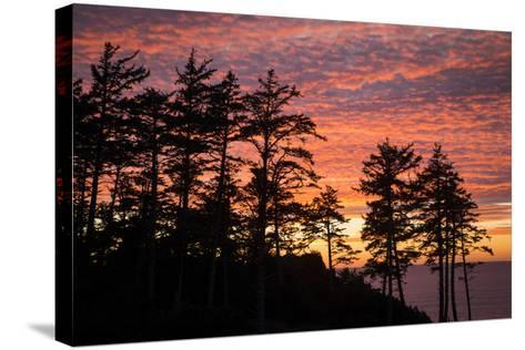 Silhouetted Fir Trees at Sunset, Ecola SP Near Cannon Beach, Oregon-Brian Jannsen-Stretched Canvas Print