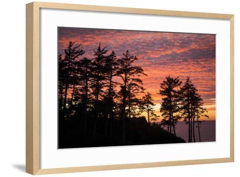 Silhouetted Fir Trees at Sunset, Ecola SP Near Cannon Beach, Oregon-Brian Jannsen-Framed Art Print