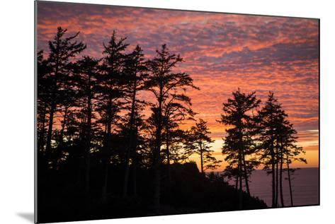 Silhouetted Fir Trees at Sunset, Ecola SP Near Cannon Beach, Oregon-Brian Jannsen-Mounted Photographic Print
