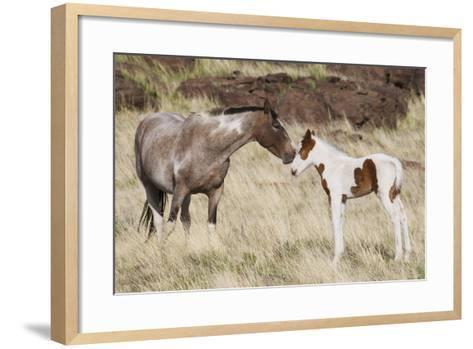Wild Horse, Steens Mountains, Mare with Colt-Ken Archer-Framed Art Print