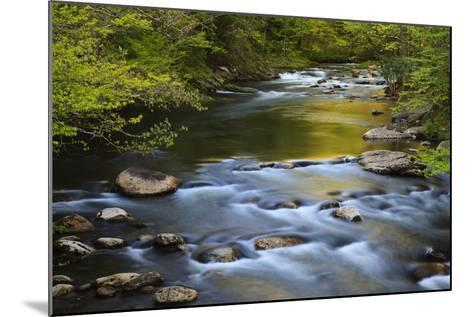 Tennessee, Spring Reflections on Little River at Smoky Mountains NP-Joanne Wells-Mounted Photographic Print