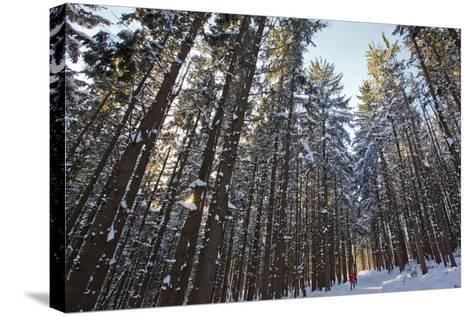 Cross-Country Skiers in a Spruce Forest, Windsor, Massachusetts-Jerry & Marcy Monkman-Stretched Canvas Print