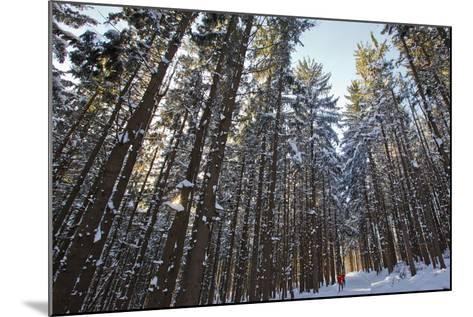 Cross-Country Skiers in a Spruce Forest, Windsor, Massachusetts-Jerry & Marcy Monkman-Mounted Photographic Print