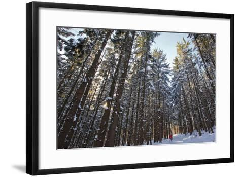 Cross-Country Skiers in a Spruce Forest, Windsor, Massachusetts-Jerry & Marcy Monkman-Framed Art Print