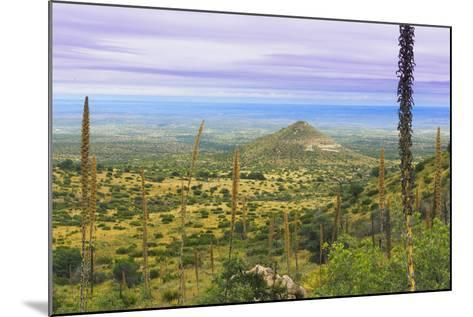 USA, Texas, Guadalupe Mountains NP. Landscape with Small Mountain-Don Paulson-Mounted Photographic Print