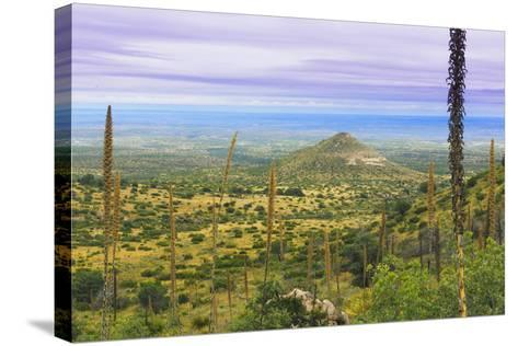 USA, Texas, Guadalupe Mountains NP. Landscape with Small Mountain-Don Paulson-Stretched Canvas Print