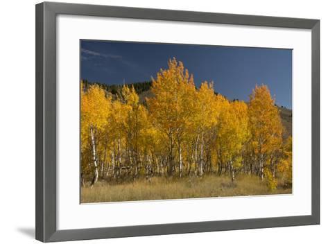 Autumn Colors, Boulder Mountains, Sawtooth National Forest, Idaho, USA-Michel Hersen-Framed Art Print