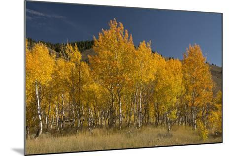 Autumn Colors, Boulder Mountains, Sawtooth National Forest, Idaho, USA-Michel Hersen-Mounted Photographic Print
