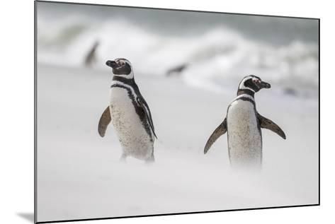 Magellanic Penguin on Beach. Falkland Islands-Martin Zwick-Mounted Photographic Print