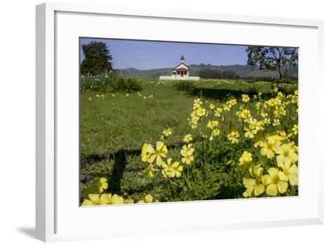 California, San Simeon, Yellow Wood Sorrel in Front of a School House-Alison Jones-Framed Art Print