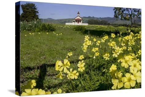 California, San Simeon, Yellow Wood Sorrel in Front of a School House-Alison Jones-Stretched Canvas Print