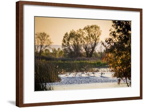 California, Gray Lodge Waterfowl Management Area, at Butte Sink-Alison Jones-Framed Art Print