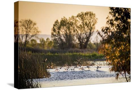 California, Gray Lodge Waterfowl Management Area, at Butte Sink-Alison Jones-Stretched Canvas Print