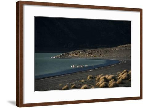 Flamingo on Blue Lake, Torres del Paine, Patagonia, Magellanic, Chile-Pete Oxford-Framed Art Print