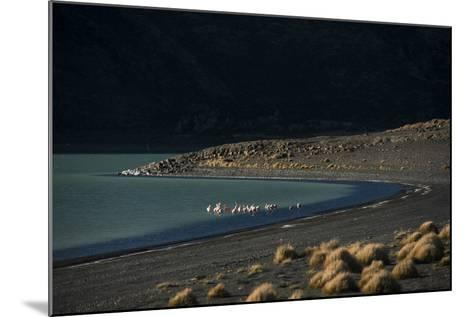 Flamingo on Blue Lake, Torres del Paine, Patagonia, Magellanic, Chile-Pete Oxford-Mounted Photographic Print