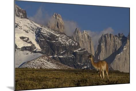 Guanaco with Cordiera del Paine in Back, Patagonia, Magellanic, Chile-Pete Oxford-Mounted Photographic Print