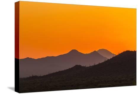 USA, Arizona, Saguaro National Park. Tucson Mountains at Sunset-Cathy & Gordon Illg-Stretched Canvas Print