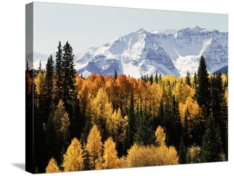 Colorado, San Juan Mountains, Autumn Aspens Below Snowy Mountains-Christopher Talbot Frank-Stretched Canvas Print