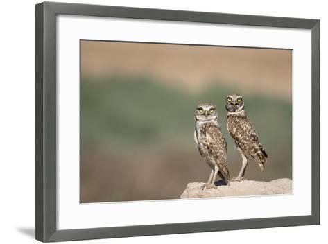 USA, Arizona, Buckeye. a Pair of Burrowing Owls-Wendy Kaveney-Framed Art Print
