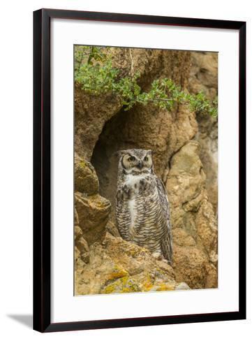 USA, Colorado, Larimer County. Great Horned Owl on Rocky Ledge-Cathy & Gordon Illg-Framed Art Print