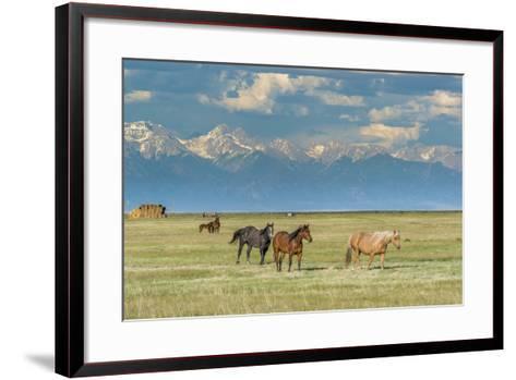 Heard of Horses in Hayfield, San Luis Valley-Howie Garber-Framed Art Print