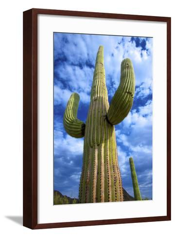 Organ Pipe Cactus National Monument, Ajo Mountain Drive in the Desert-Richard Wright-Framed Art Print