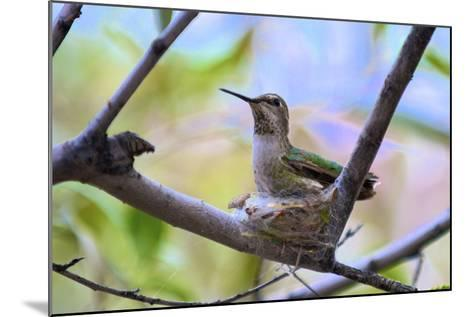 A Ruby-Throated Hummingbird, One of the Most Common of the Hummers-Richard Wright-Mounted Photographic Print