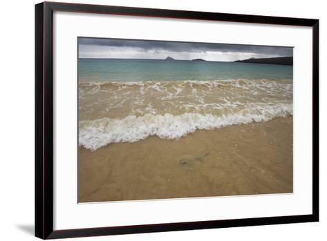 Diamond Stingray, Floreana Galapagos Islands, Ecuador-Pete Oxford-Framed Art Print