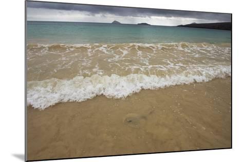 Diamond Stingray, Floreana Galapagos Islands, Ecuador-Pete Oxford-Mounted Photographic Print