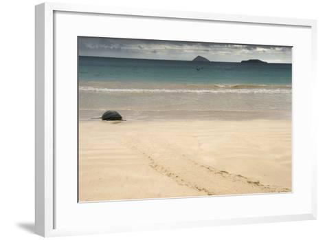 Galapagos Green Turtle Nesting. Floreana Island, Galapagos, Ecuador-Pete Oxford-Framed Art Print