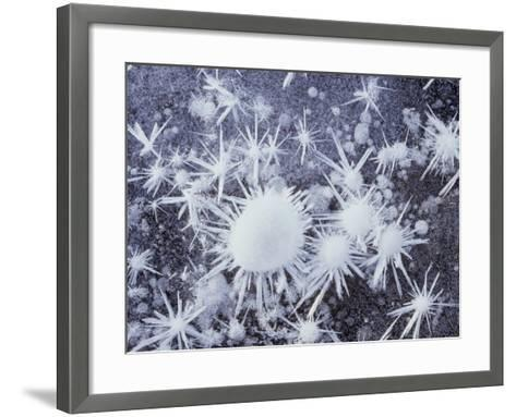 California, Sierra Nevada, Ice Crystals on a Lake for Frozen Bubbles-Christopher Talbot Frank-Framed Art Print