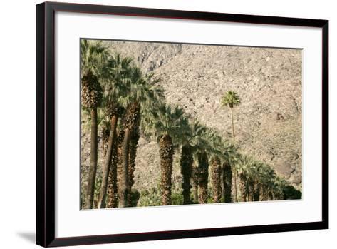 Scenic of Palm Trees, Palm Springs, California, USA-Julien McRoberts-Framed Art Print