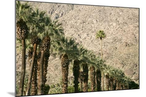 Scenic of Palm Trees, Palm Springs, California, USA-Julien McRoberts-Mounted Photographic Print