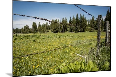 Idaho, Camas Prairie, Field and Barbed Wire Fence-Alison Jones-Mounted Photographic Print