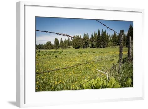 Idaho, Camas Prairie, Field and Barbed Wire Fence-Alison Jones-Framed Art Print