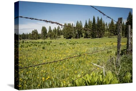 Idaho, Camas Prairie, Field and Barbed Wire Fence-Alison Jones-Stretched Canvas Print