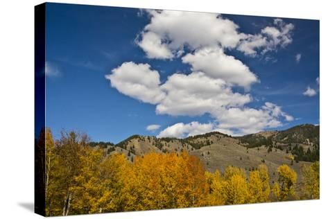Aspens, Evergreens, Boulder Mountains, Autumn, Sawtooth NF, Idaho, USA-Michel Hersen-Stretched Canvas Print
