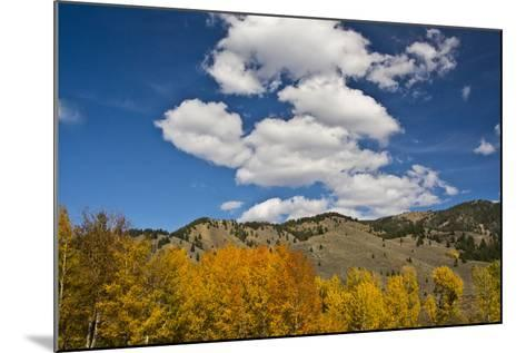 Aspens, Evergreens, Boulder Mountains, Autumn, Sawtooth NF, Idaho, USA-Michel Hersen-Mounted Photographic Print