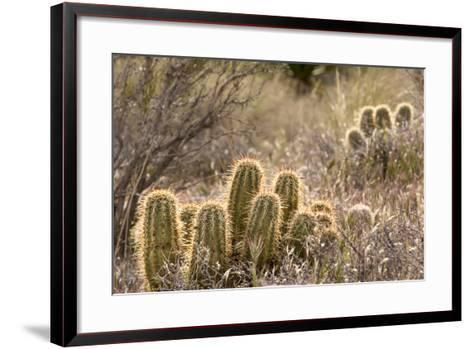 Red Rock Canyon National Conservation Area, Las Vegas, Nevada-Rob Sheppard-Framed Art Print