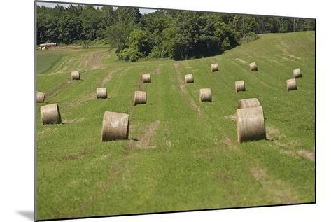 Minnesota. Dakota County, Rolled Bales of Hay in a Green Field-Bernard Friel-Mounted Photographic Print